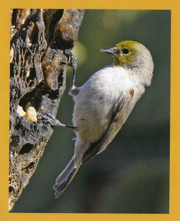 1001 secrets bird