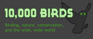 January 2009 Is Parrot Month on 10,000Birds.com