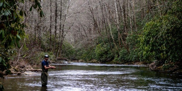 Birding and Fly-fishing in Pisgah National Forest