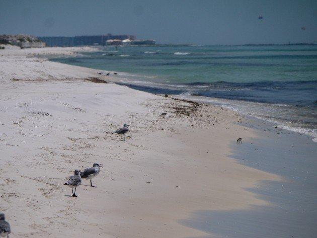 emerald coast, birding
