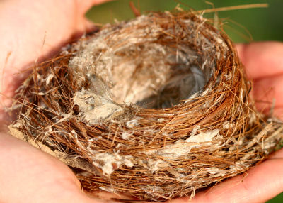 unknown nest