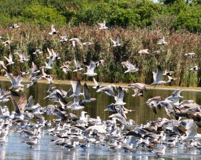 birds flushing