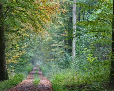 Naturschutzgebiet Elienhain