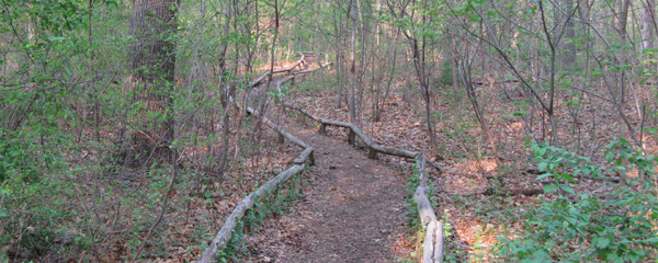 Trail through Forest Park