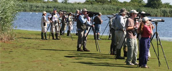 birders birding Jamaica Bay