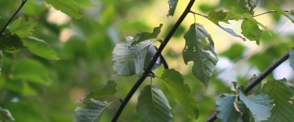 Diabolical Confusing Fall Warbler  Quiz 1