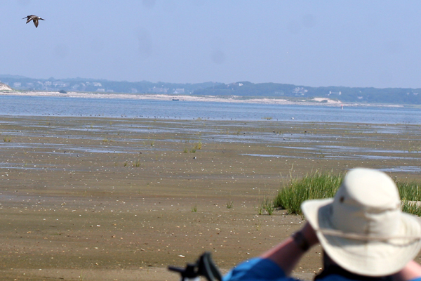 JJohn of Born Again Bird Watcher watching a godwit fly by