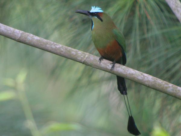 10,000 Birds Birding Cerro Azul Meambar National Park Part 1