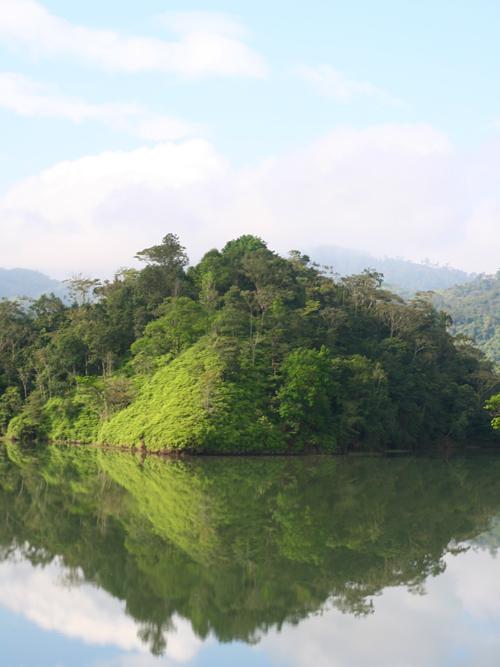 10,000 Birds On Not Birding a Cloud Forest - 10,000 Birds