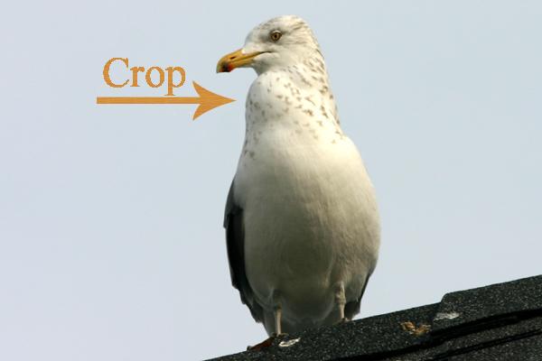 external image crop-gull.jpg