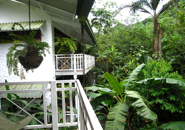 Simply put ... & 10000 Birds Canopy Lodge: Panama Birding Perfection - 10000 Birds