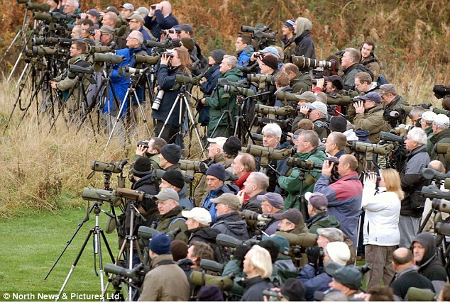 We have a lot of birders in NJ  but we   ve got nothing on the UK