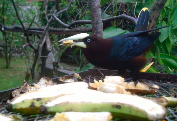 What Human Foods Can Birds Eat? | Trails.com