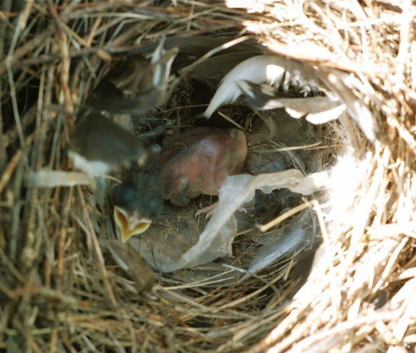 What Type Of Baby Food Can You Feed Baby Robins