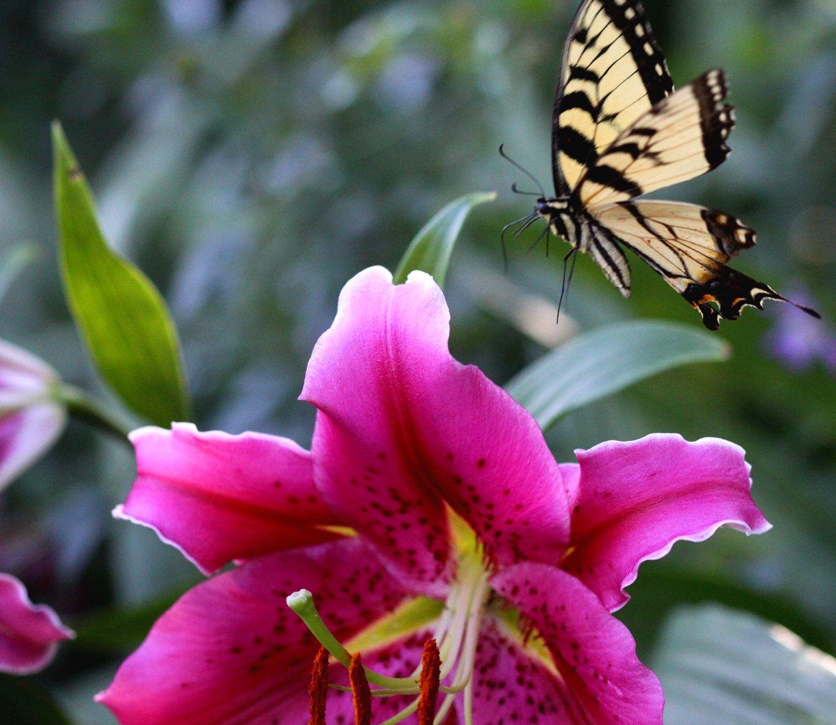10 000 birds butterfly on flowers for Butterfly on flowers