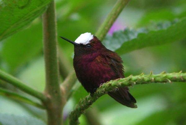 10,000 Birds Twenty Hummingbirds To See Before You Die ...