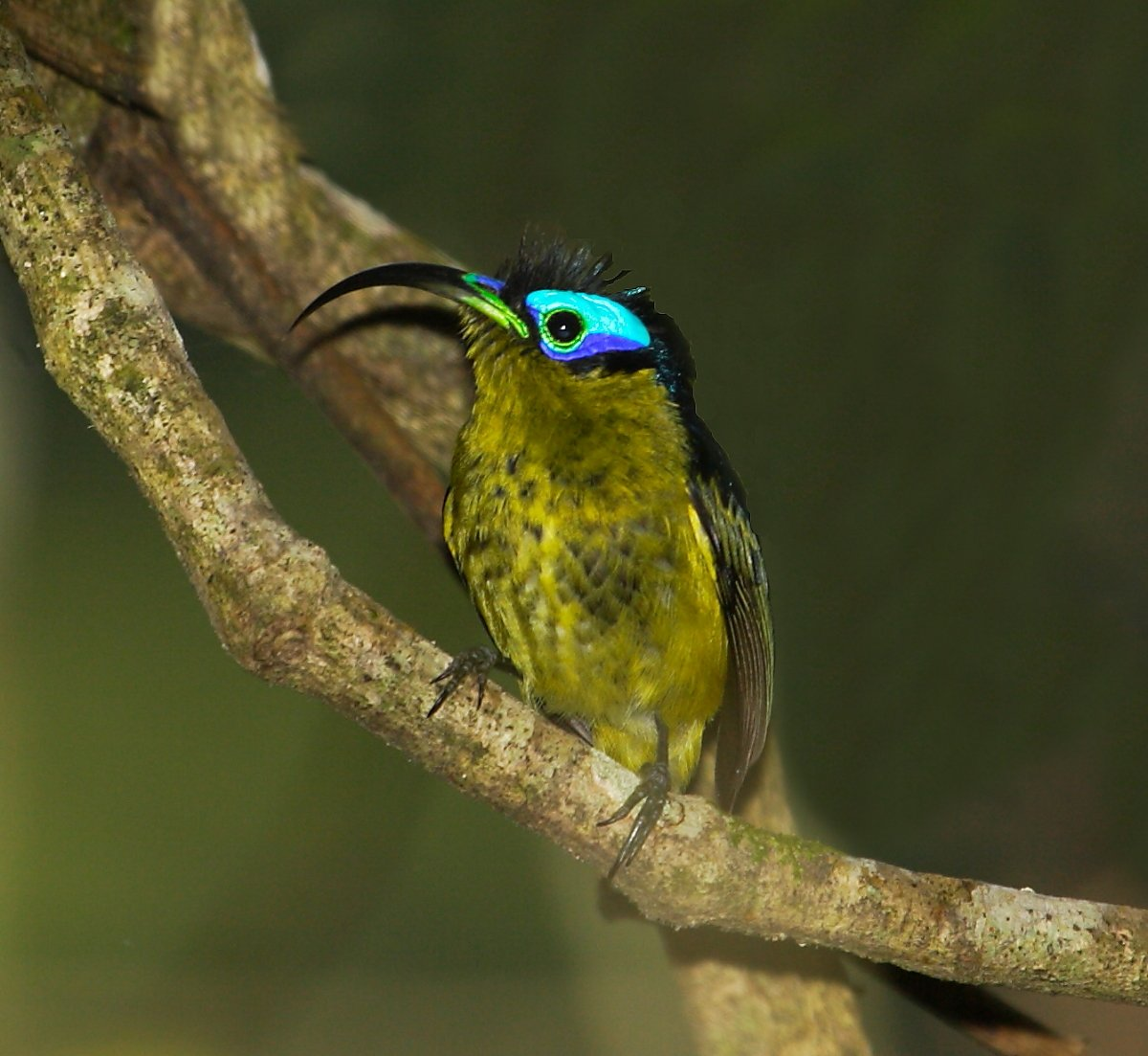 Birds Sunbird: 10,000 Birds Introducing The African Birding Beat