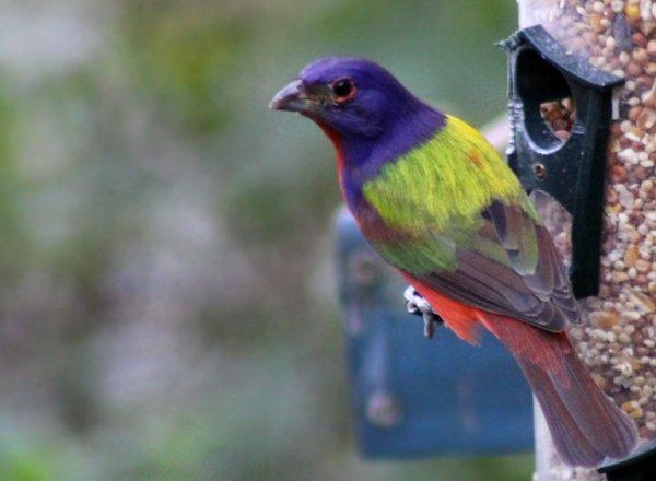 Heredero del café multado $ 15.000 por mantener aves protegidas en la casa de Coconut Grove | Miami Herald