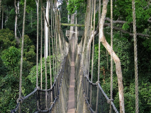 Educational safari into the Amazon rainforest including the canopy