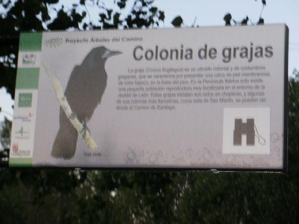 mystery bird sign
