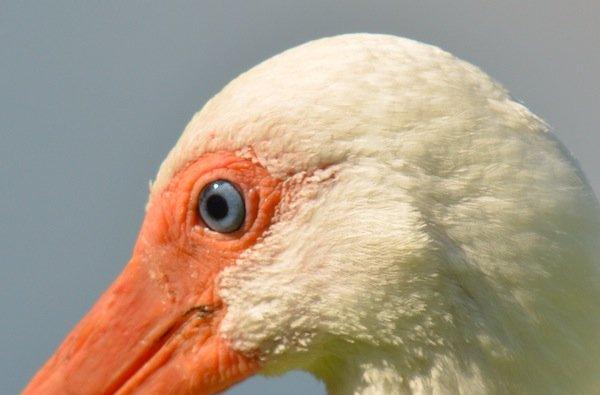 ¿Cuáles son los pájaros de qué color es la comida? - CienciaBob.com