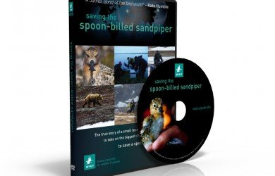 Saving the Spoon-billed Sandpiper: The Movie