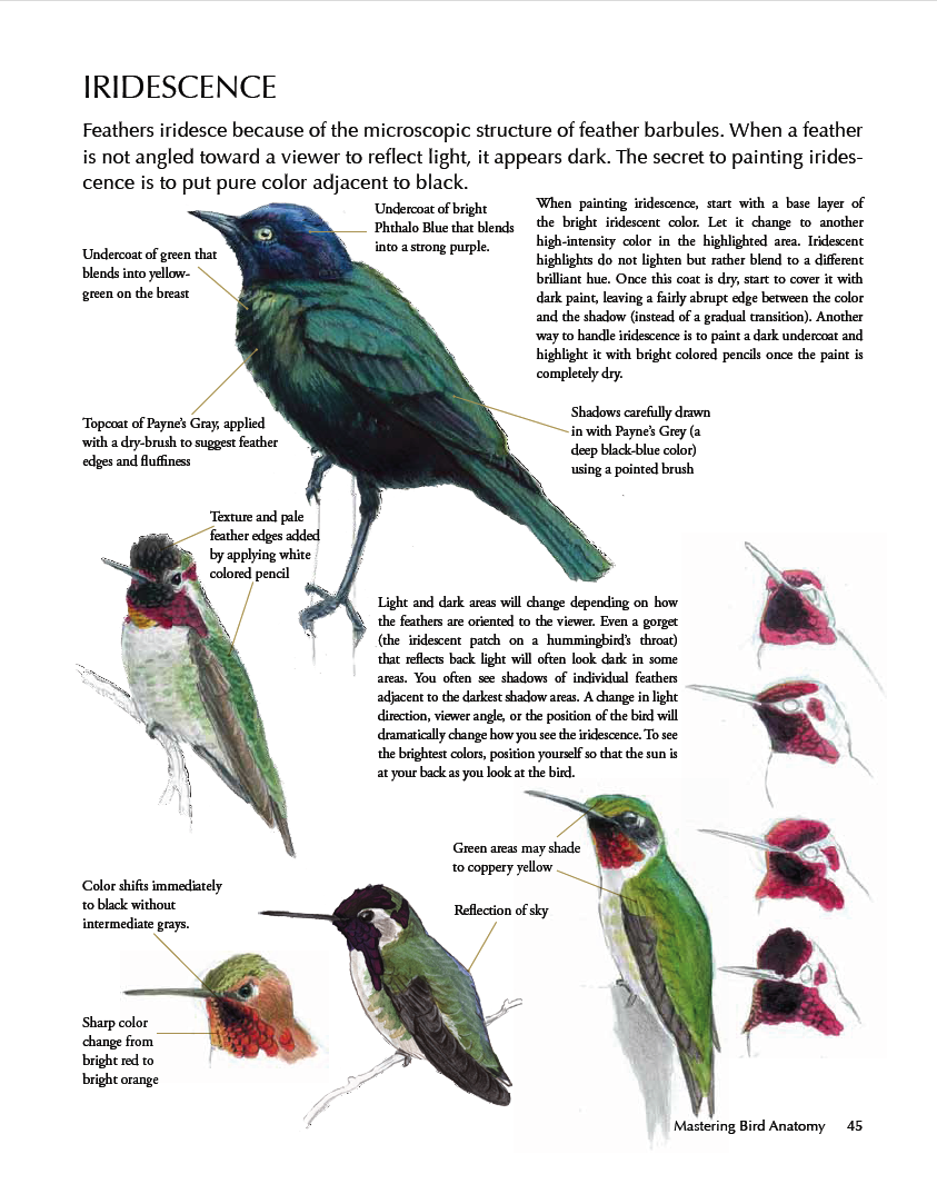 10,000 Birds Laws Guide to Drawing Birds - 10,000 Birds