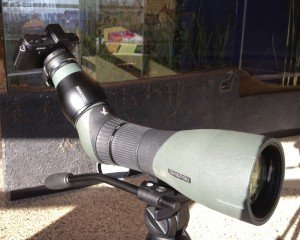 digiscoping set up