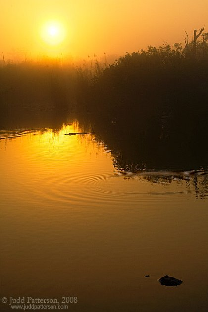 gator_sunrise_5D_080315_0865