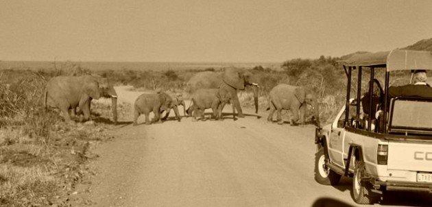 30_madikwe elephant 2