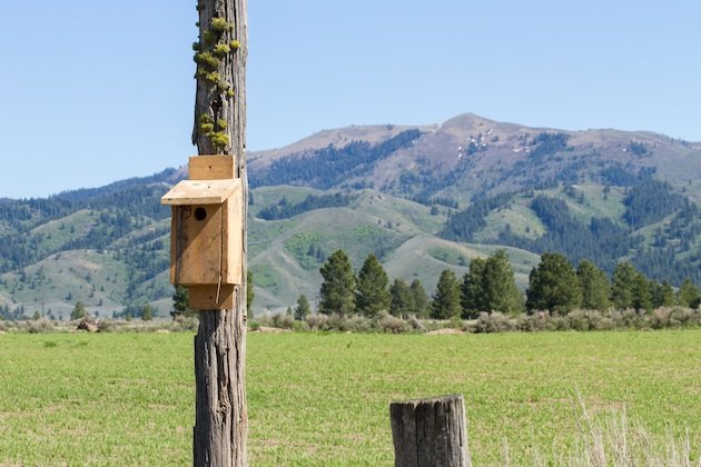 Bluebird nest box near Prairie, Idaho