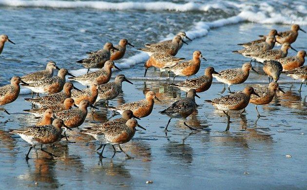 Flock running