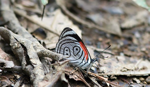 89butterfly