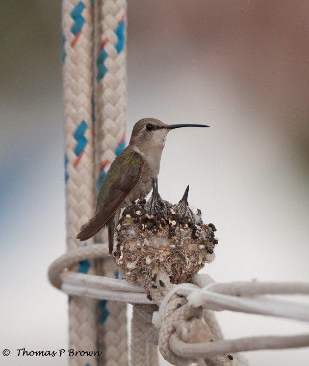 New nest location-2