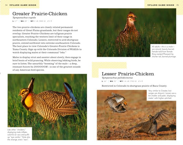 colorado prairie-chickens