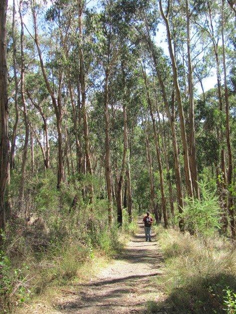 Acacia Track
