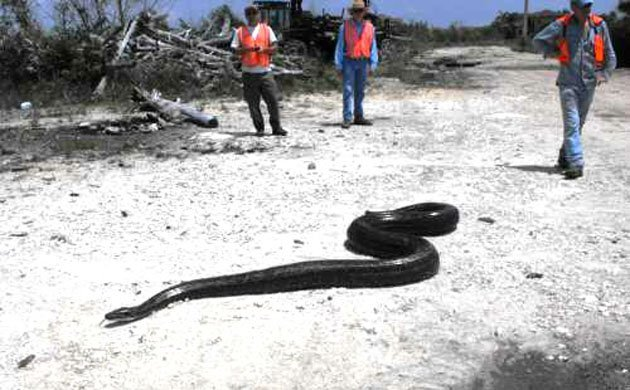 african python 2
