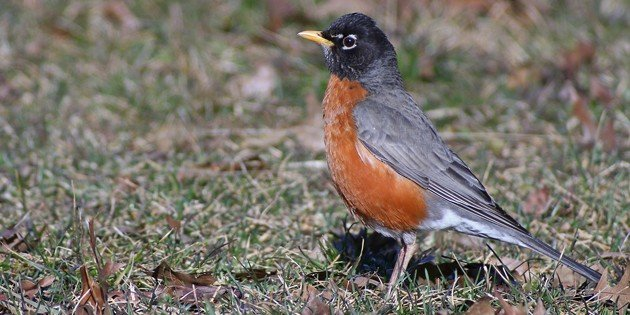 Late March Birding in Queens