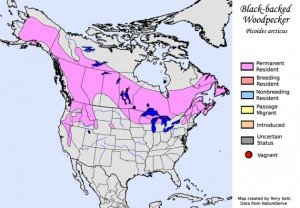Black-backed Woodpecker Range Map