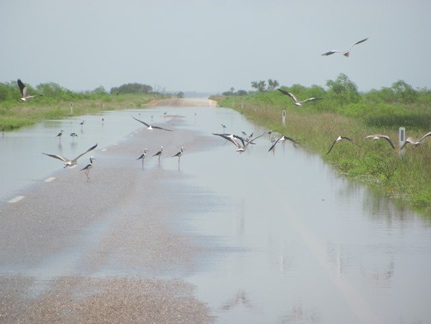 Birds feeding on the road (2)