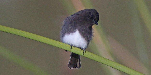 New Year's Day Birding at San Joaquin Wildlife Sanctuary