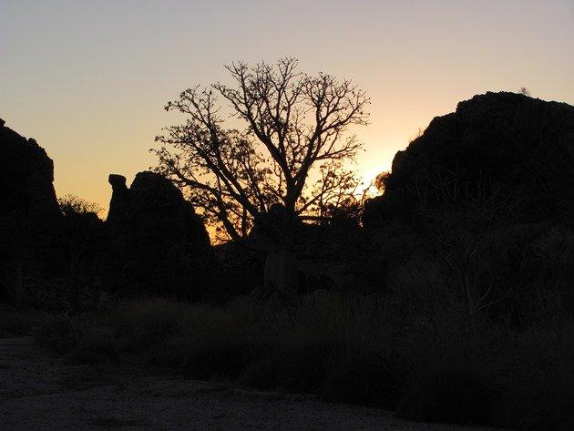 Boab sunrise