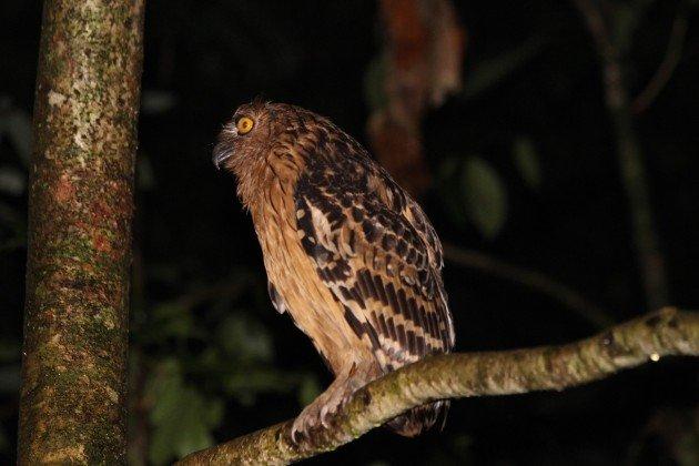 Borneo 414