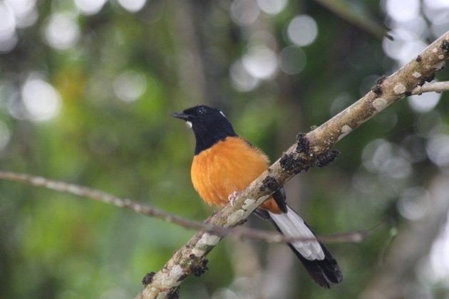 Borneo 496 (630x420)
