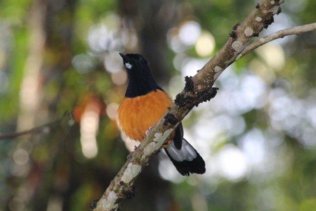 Borneo 498 (630x420)