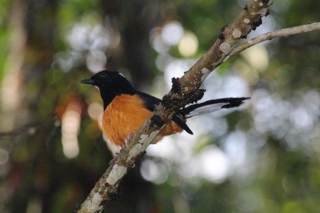 Borneo 499 (630x420)