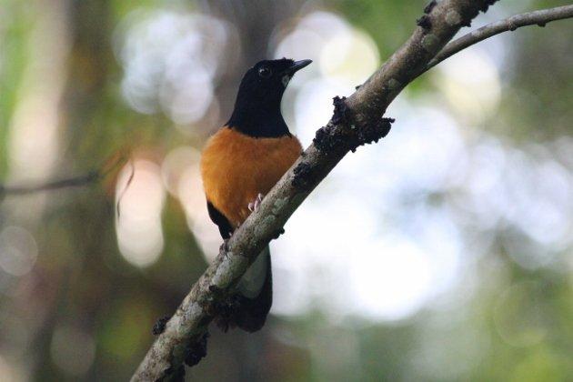 Borneo 501 (630x420)