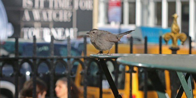 November Birding in Bryant Park