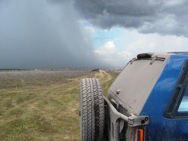 Bull dust & storm