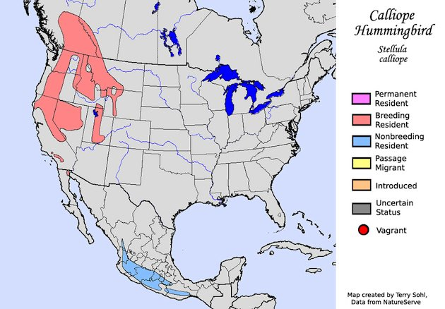 Calliope Hummingbird Range Map